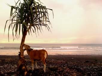 medewi-beach